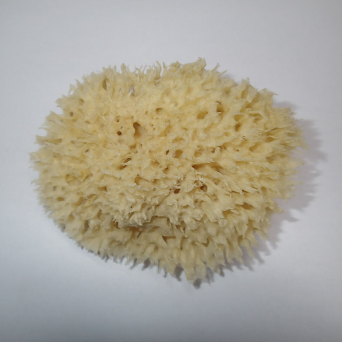 MOØSKÁ HOUBA Honeycomb 9-10 cm - Houby,žínky,rukavice - zvìtšit obrázek